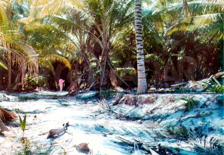 Cancún 1970