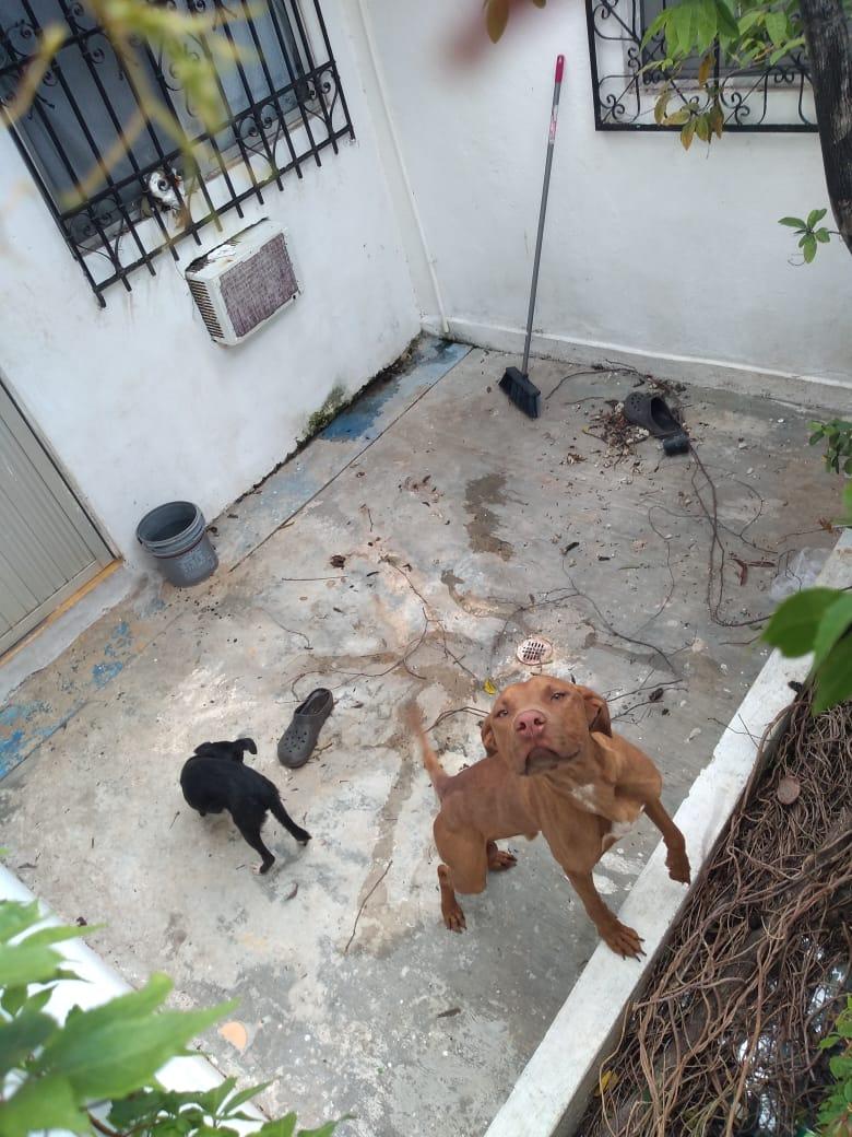 Vecino del fraccionamiento Paseos del Caribe realizó el reporte de unos perritos maltratados, recibió el número de reporte 891, pero las autoridades no han actuado.