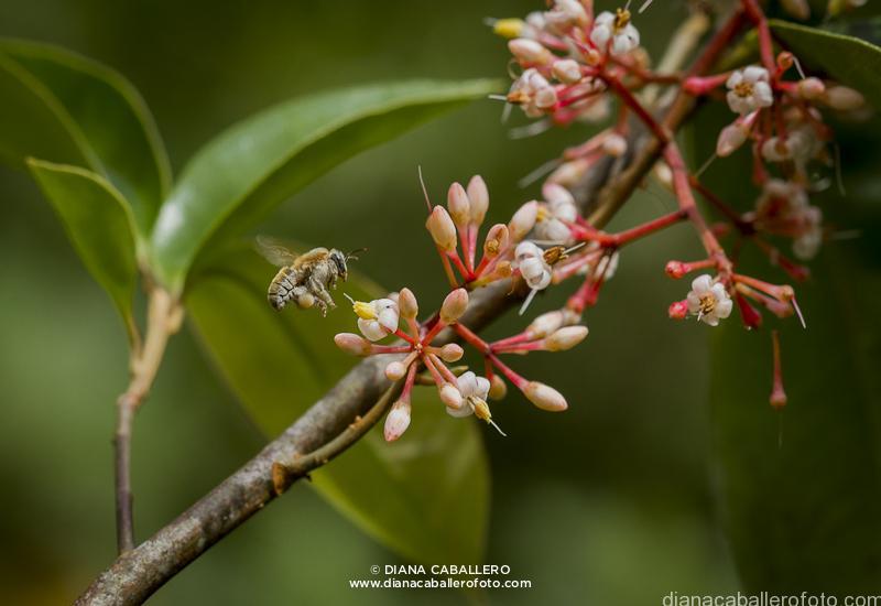 Fotos: dianacaballerofoto.com/