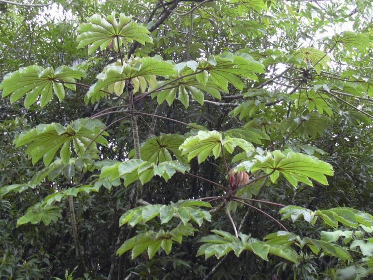 plantas diabetes