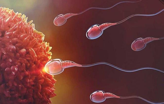 espermatozoide 3d