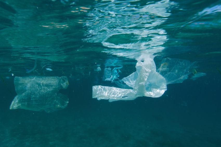 Sin bolsas de plástico... ¿cómo te va?